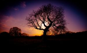 Bedfords at dusk w